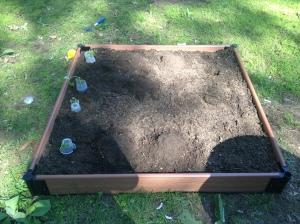 This year's garden!